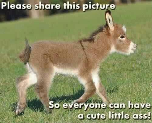 Please share this photo so everyone can have a cute little ass...