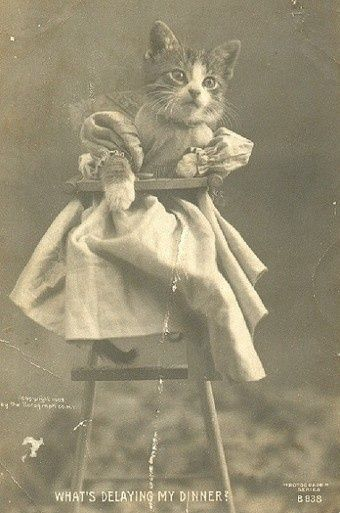 Antique photo from 1905 from a cat in a high chair.