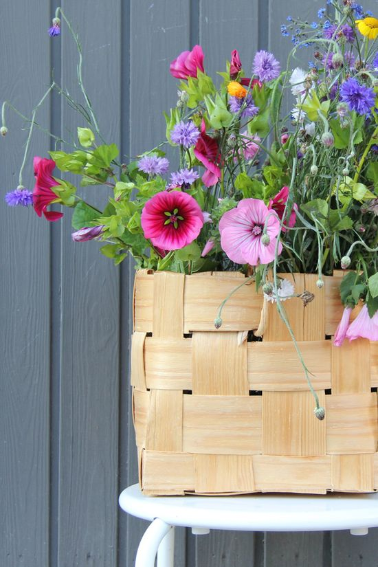 .love this from the cottage garden