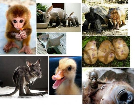Cute baby animals ?