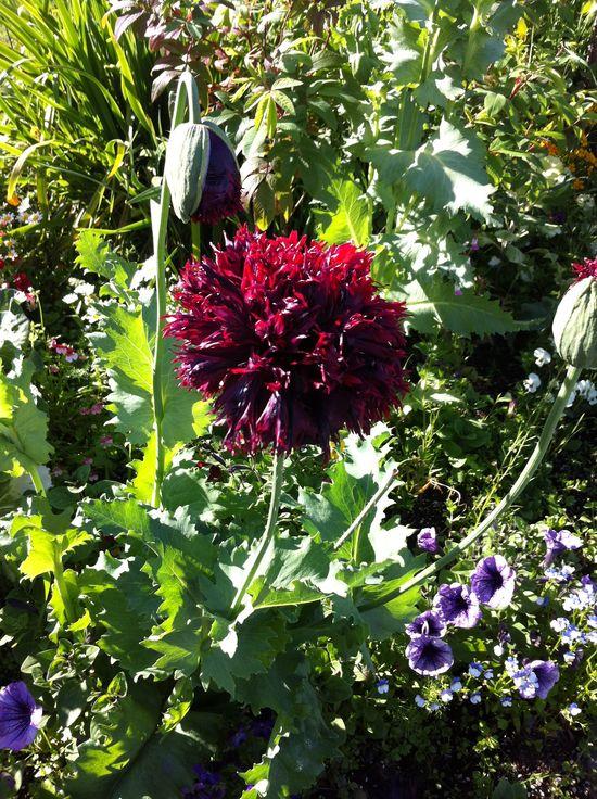Beautiful Flower in Seward