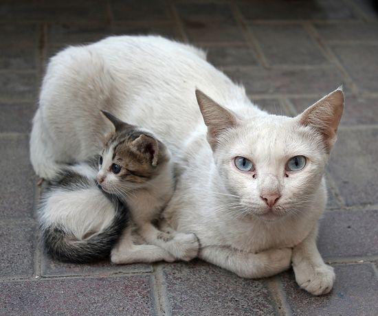 Cat and kitten in Dubai.