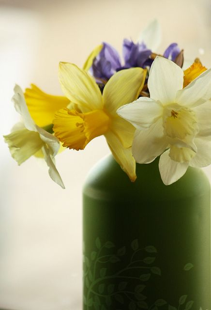Daffodils in the Window by beegardener, #Daffodils