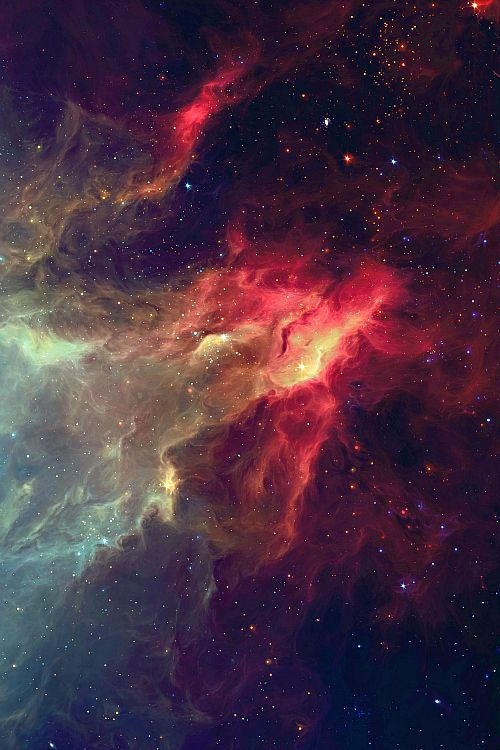 Cosmos » Gorgeous!