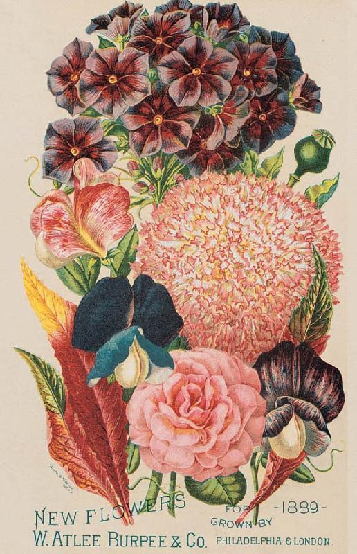 Burpees 1889