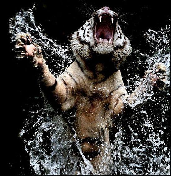Stunning Wild Animal Photographs