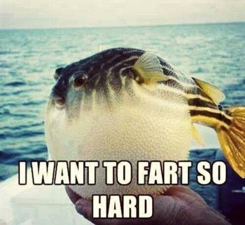 Fish farts are funny