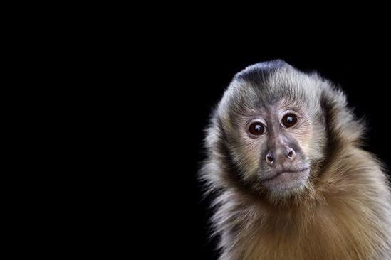 Incredible Studio Portraits of Wild Animals by Brad Wilson