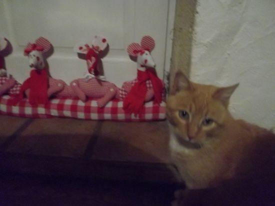 jeanette la chatte e