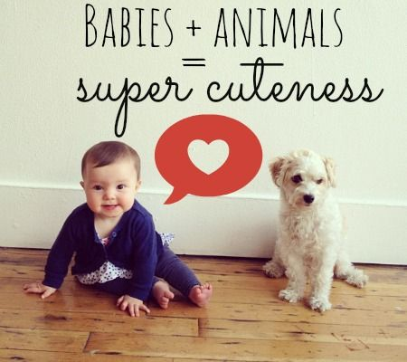 Babies + Animals = Cuteness