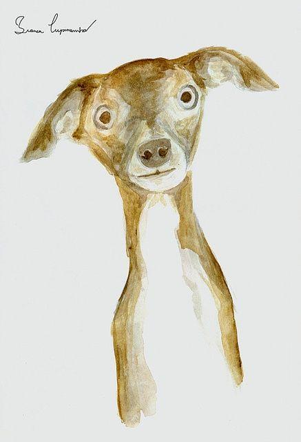 Cachorro - whippet, via #Cute pet #pet girl #pet boy