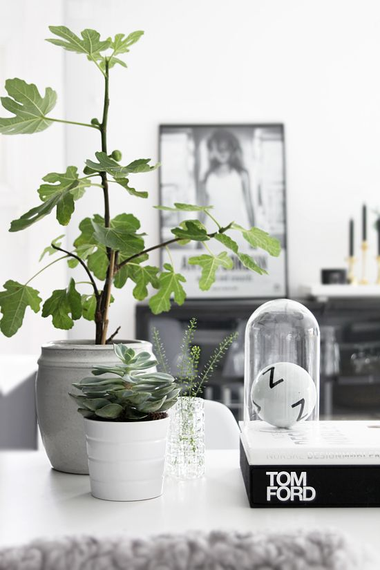 figtree, green plants, living room, stylizimo