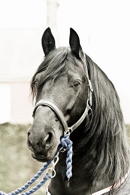 *There is something about the outside of a horse that is good for the inside of a man. ~ Winston Churchill