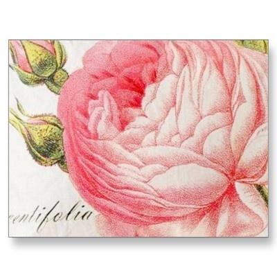 Vintage retro romantic valentines rose postcards