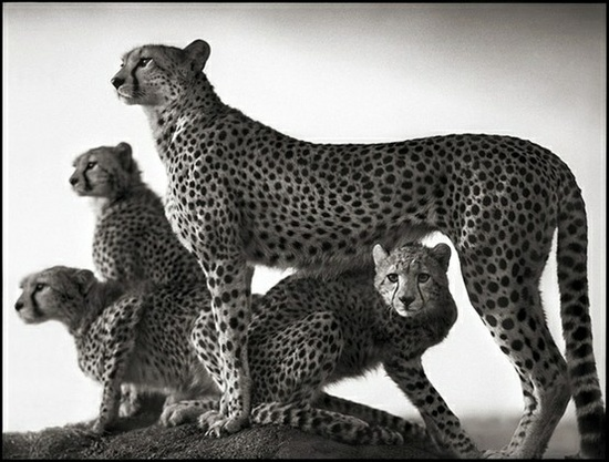 It All Appeals to Me: Amazing African Animals
