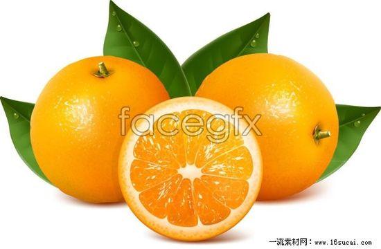 Fresh fruit Orange vector