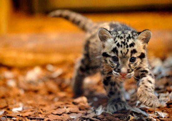 25 baby animals