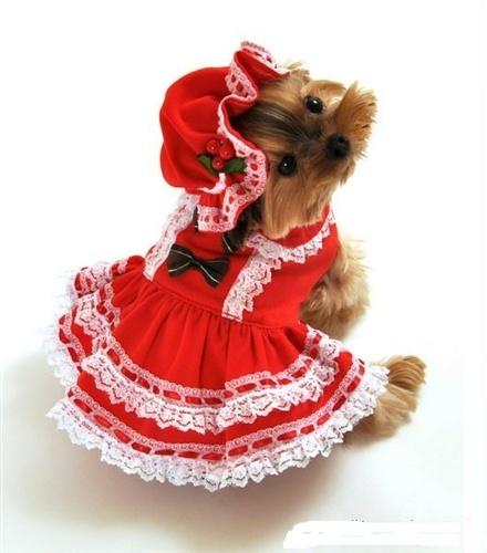 Miss Santa Baby Dog Costume