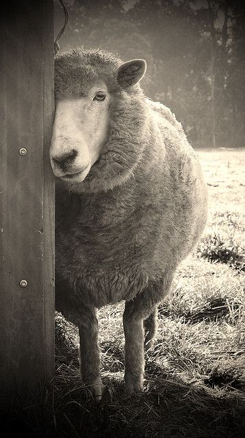~sheepish~     :)