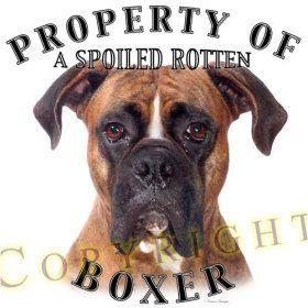 Boxer dog shop