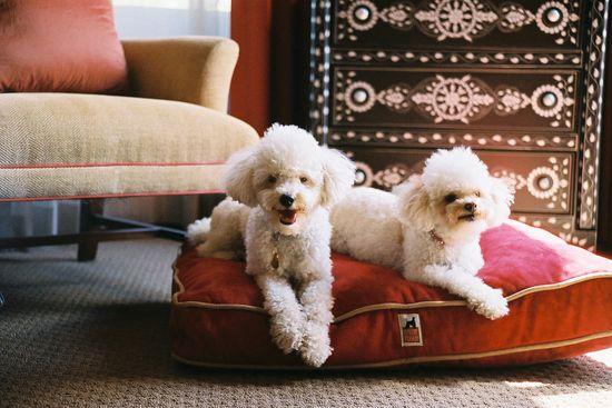 Glamorous home, glamorous pets!!