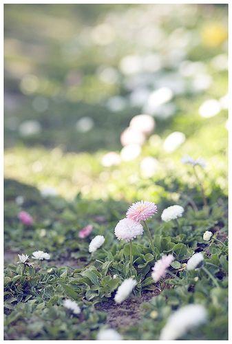 Spring Time by loretoidas, via Flickr