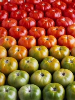 10 Simple Tips For Growing Tomatoes
