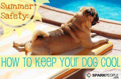 Pets and the #Summer Heat: How to Keep Them Safe and Cool
