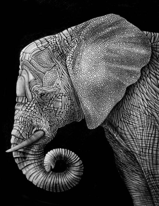Elephant ink illustration. S)