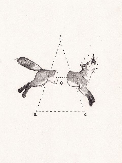Fox bisect by Peter Carrington, via Flickr