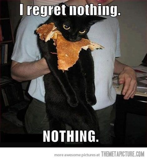If I had a cat, it would be this one