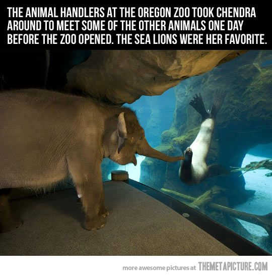 Zoo handlers took elephant around to see the other animals.