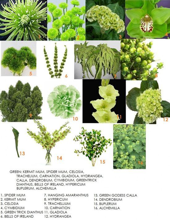 Flower arrangement Fillers