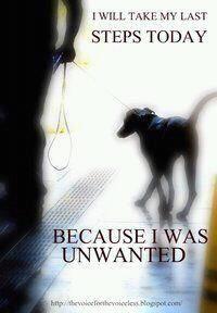 Save a life. Adopt.