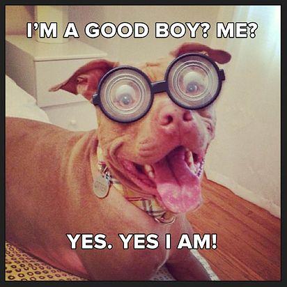 good boy ?
