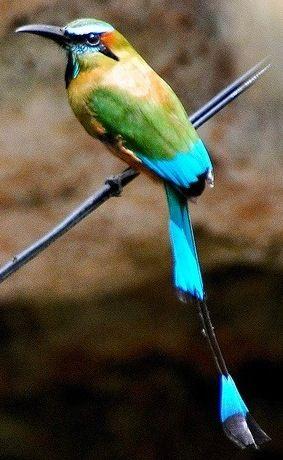 Paradise of Birds
