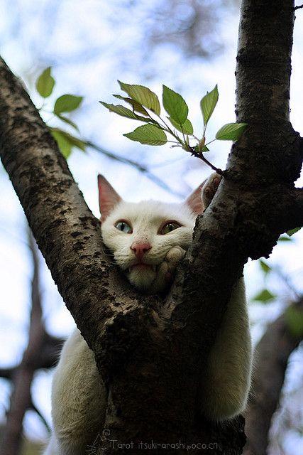 up a tree...