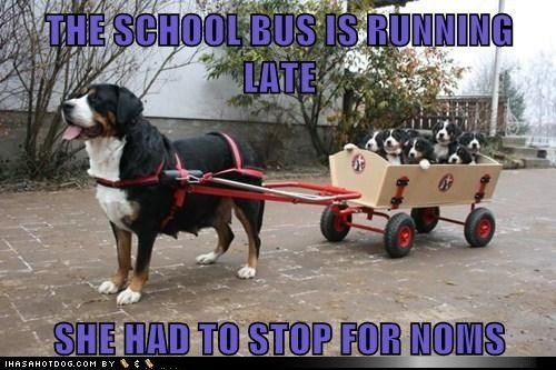 funny dog pictures - THE SCHOOL BUS IS