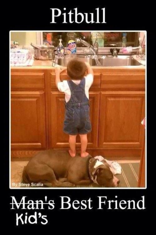 Pit bulls are great dogs