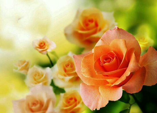 Love this color rose.