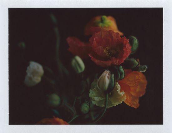 by Heidi Swanson, via Flickr