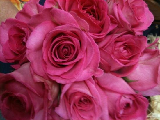 My favorite...pink roses