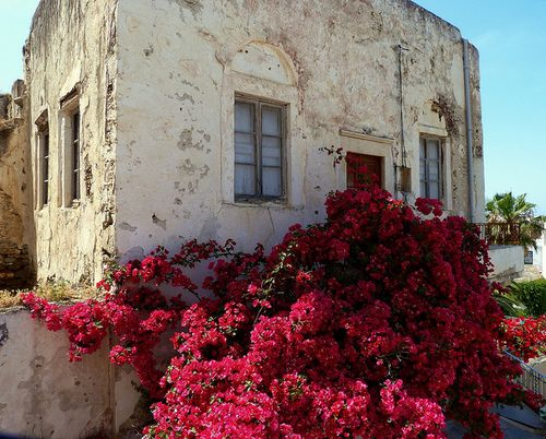 bougainvillea tumbling from the mouth www.nomad-chic.co...