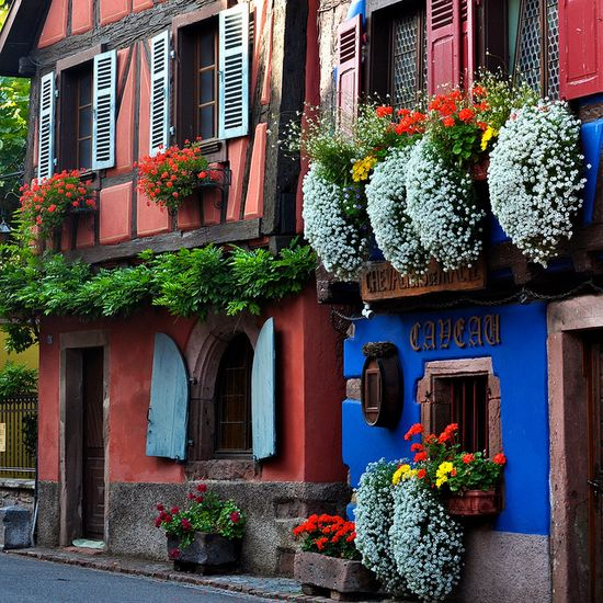 Bright buildings in Alsace, France.  Niedermorschwihr is beautiful in any season by Michele*mp, via Flickr #travel <--- omg, this makes me want to go to France unbearably. J'y irai, j'y irai...je dois me le dire. :)