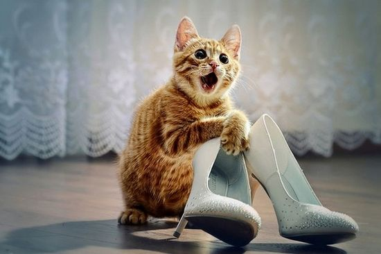 Cats & Shoes, cute site.. Yes, I would like a refund.dp