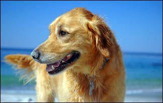 Top ten pet vacation spots