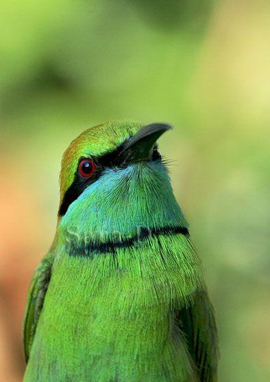 pretty green bird