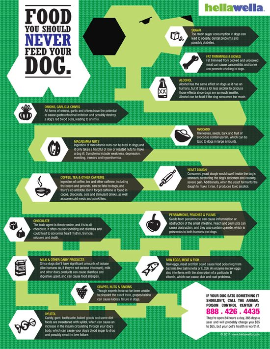 Food you should not feed your dog