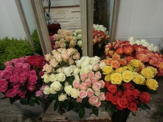 Roses roses every color roses