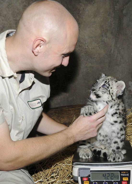 Chicago Tribune - Baby animal photos